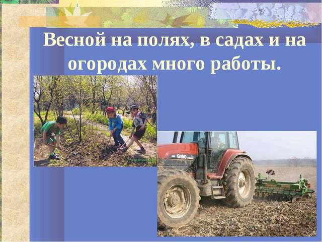 Весной на полях, в садах и на огородах много работы.