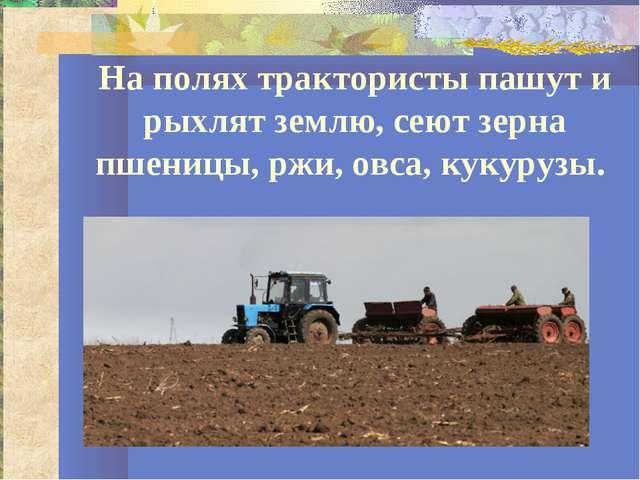 На полях трактористы пашут и рыхлят землю, сеют зерна пшеницы, ржи, овса, кук...