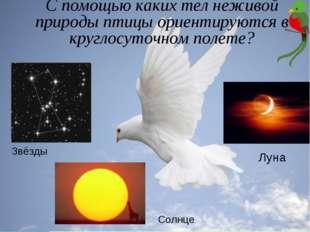 С помощью каких тел неживой природы птицы ориентируются в круглосуточном поле