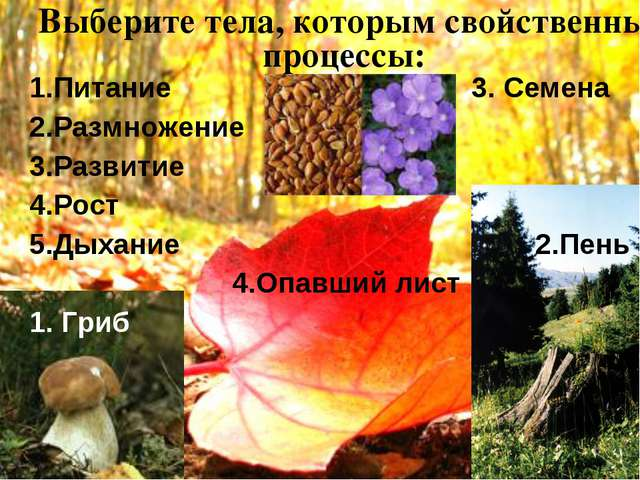Выберите тела, которым свойственны процессы: 1.Питание 3. Семена 2.Размножени...