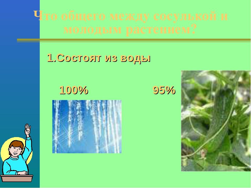 Что общего между сосулькой и молодым растением? 1.Состоят из воды 100% 95%