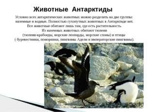 Условно всех антарктических животных можно разделить на две группы: наземные