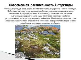 Флора Антарктиды очень бедна. Больше всего здесь водорослей – около 700 видов