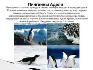 Большую часть жизни проводят в океане, а на берег выходят в период гнездовья.