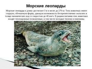 Морские леопарды в длину достигают 3 м и весят до 270 кг. Тело животных имеет