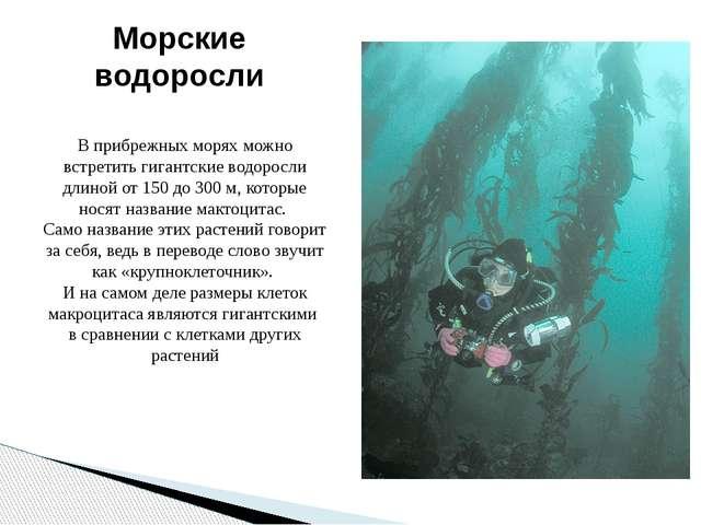 Морские водоросли В прибрежных морях можно встретить гигантские водоросли дли...