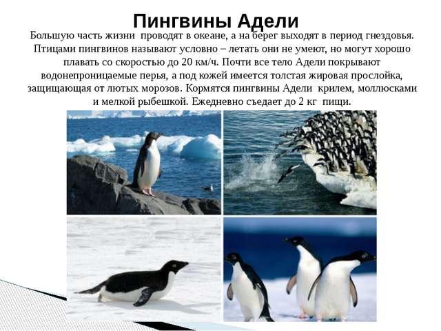 Большую часть жизни проводят в океане, а на берег выходят в период гнездовья....