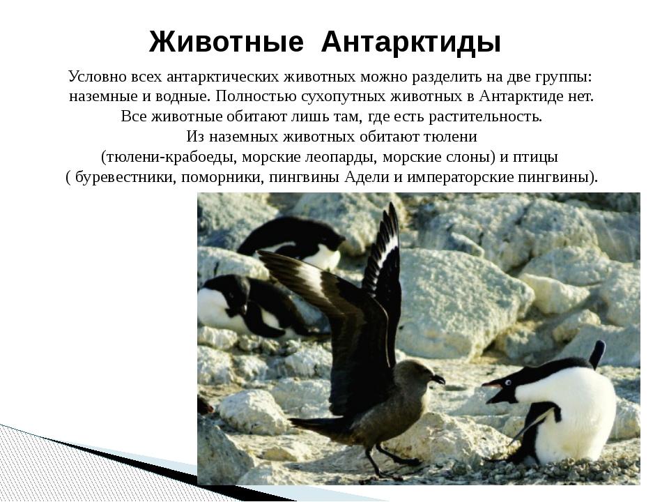 Условно всех антарктических животных можно разделить на две группы: наземные...