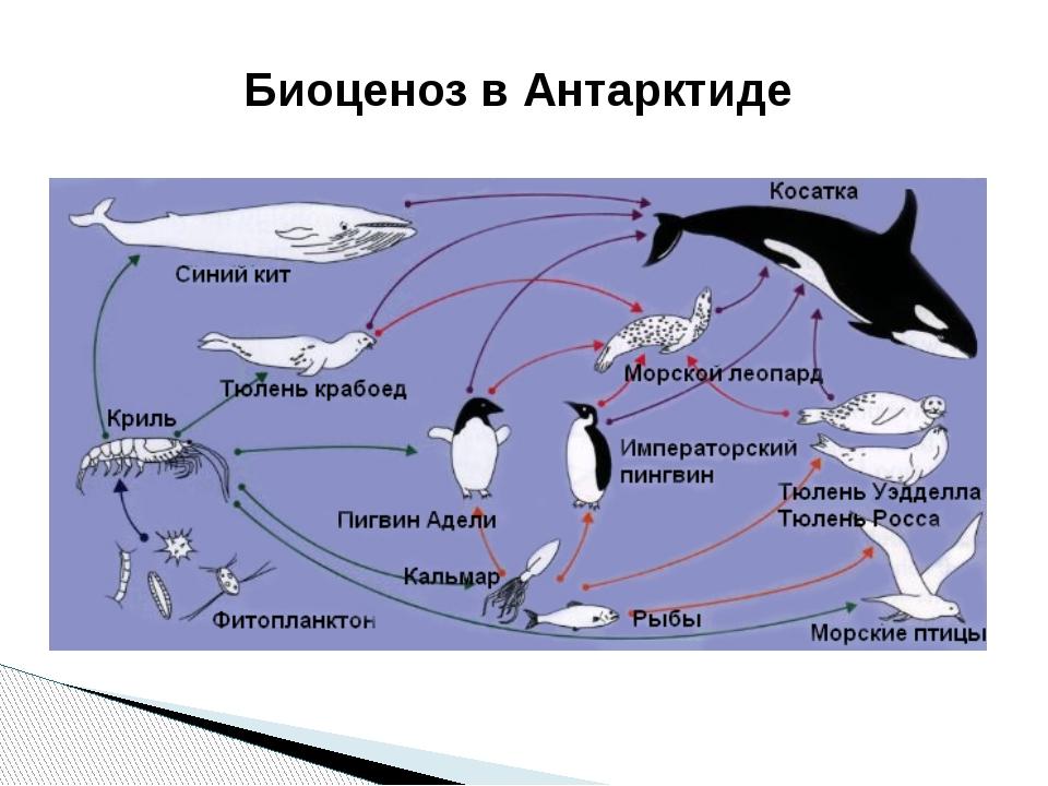 Биоценоз в Антарктиде