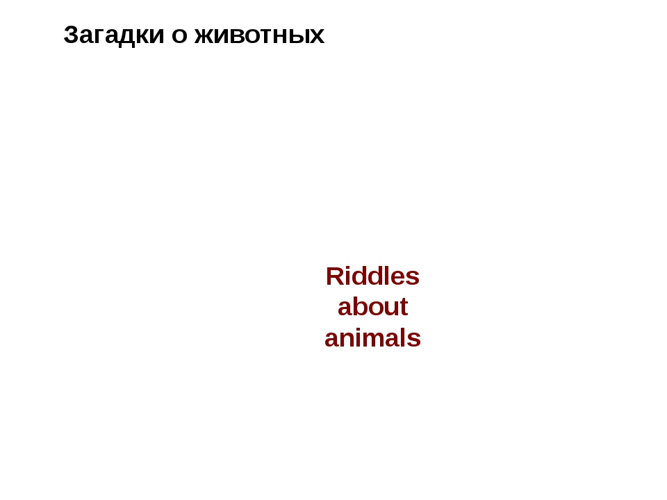 Riddles about animals Загадки о животных