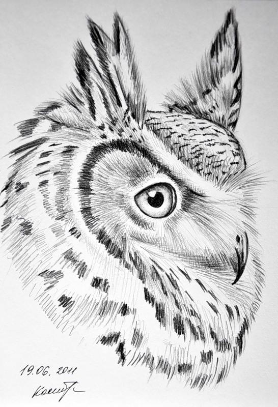Купить картину Ушастая сова / Картины Животные и птицы / Кар…