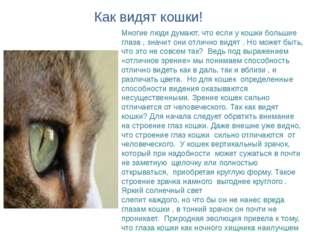 Многие люди думают, что если у кошки большие глаза , значит они отлично видят