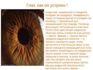Когда свет, отраженный от предмета, попадает на переднюю, поверхность глаза,