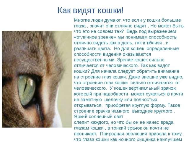 Многие люди думают, что если у кошки большие глаза , значит они отлично видят...