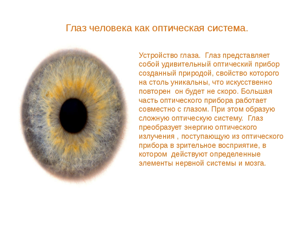 Глаз человека как оптическая система. Устройство глаза. Глаз представляет соб...