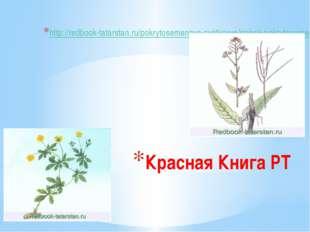 Красная Книга РТ http://redbook-tatarstan.ru/pokrytosemennye-cvetkovye/spisok