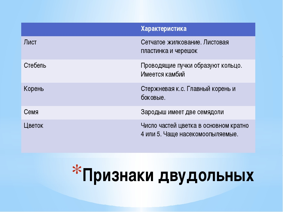 Признаки двудольных Характеристика Лист Сетчатое жилкование. Листовая пластин...