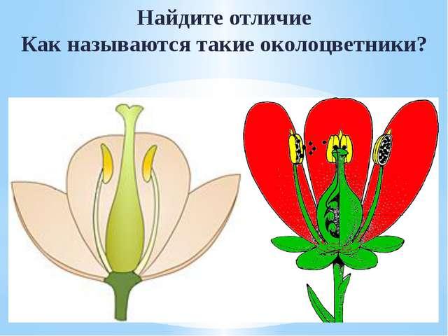 Найдите отличие Как называются такие околоцветники?