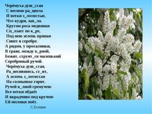 Черёмуха душ_стая С весною ра_цвела И ветки з_лотистые, Что кудри, зав_ла. Кр