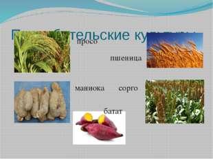 Потребительские культуры просо пшеница маниока сорго батат