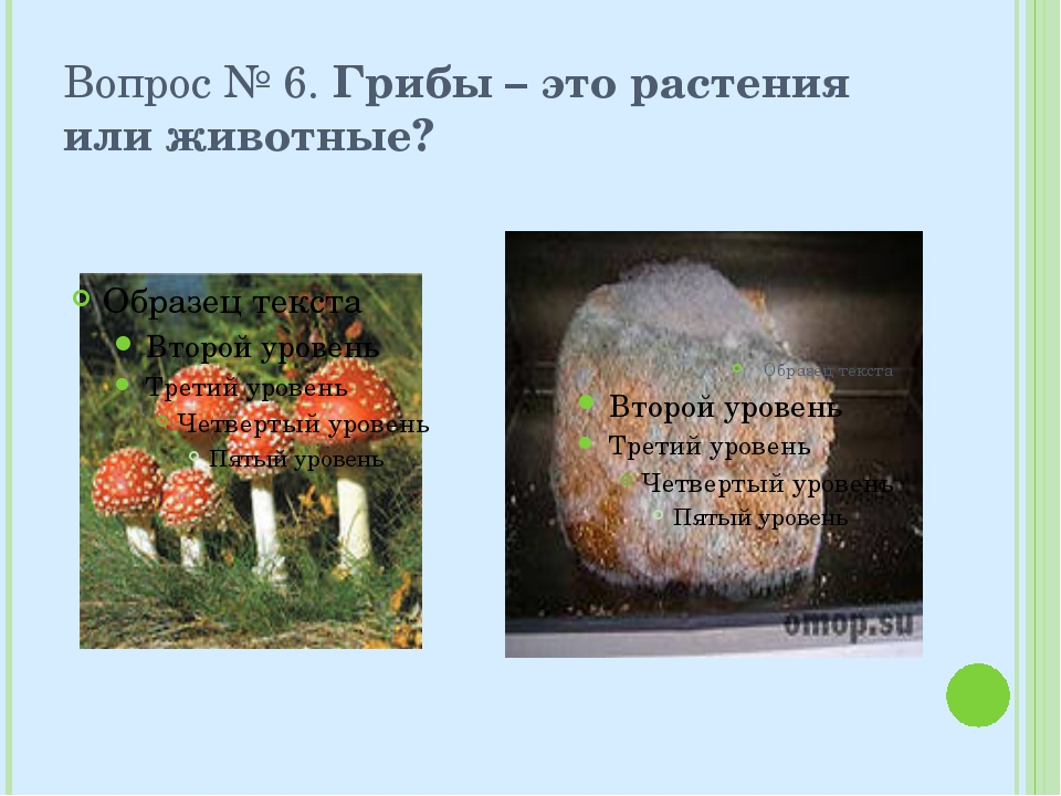 Вопрос № 6. Грибы – это растения или животные?