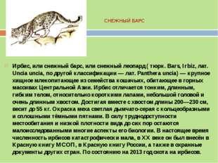 СНЕЖНЫЙ БАРС Ирбис, или снежный барс, или снежный леопард ( тюрк. Bars, Irbiz