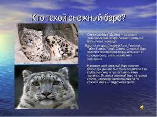 Кто такой снежный барс? Снежный барс (Ирбис)— красивый дымчато-серый котяра