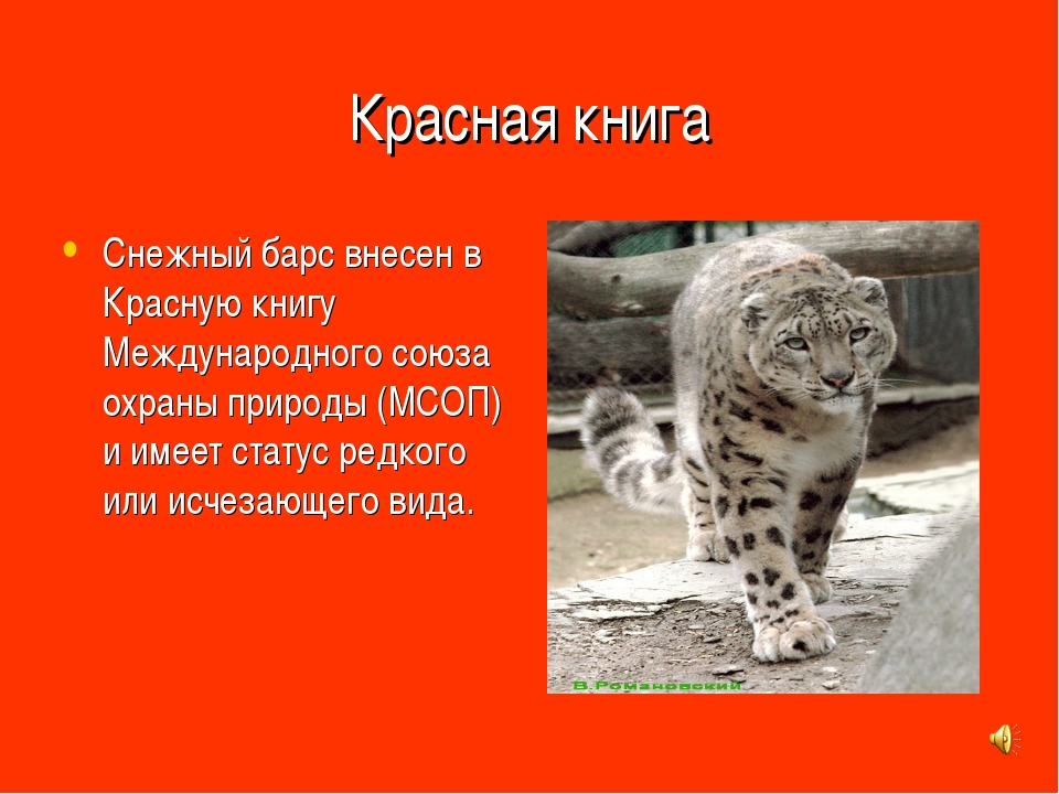 Красная книга Снежный барс внесен в Красную книгу Международного союза охраны...