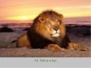 У4: This is a lion