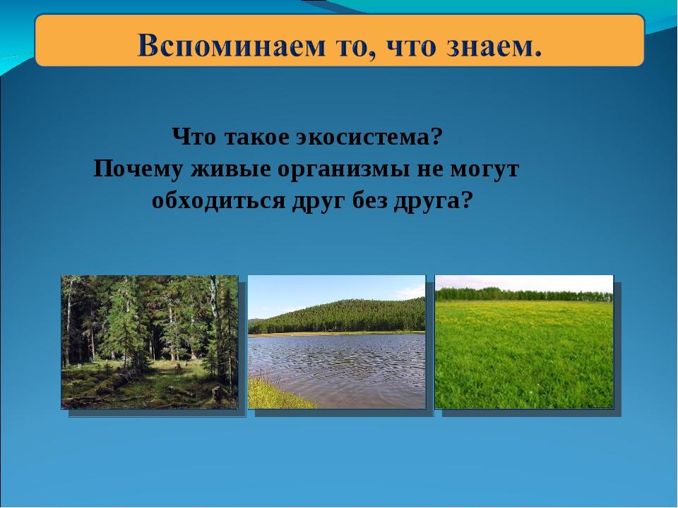 Что такое экосистема? Почему живые организмы не могут обходиться друг без др...