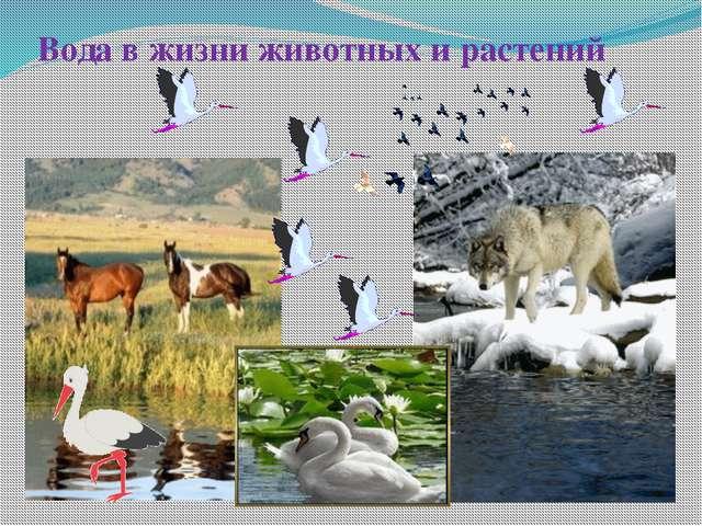 Вода в жизни животных и растений
