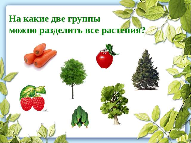 На какие две группы можно разделить все растения?