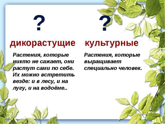Растения, которые выращивает специально человек. Растения, которые никто не...