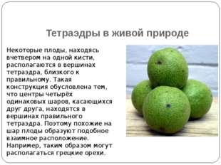 Тетраэдры в живой природе Некоторые плоды, находясь вчетвером на одной кисти,