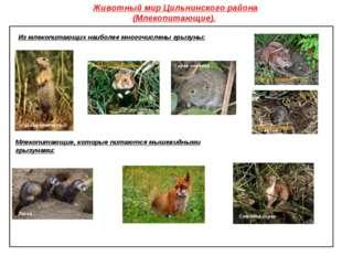 Животный мир Цильнинского района (Млекопитающие). Из млекопитающих наиболее м