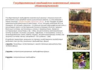 Государственный ландшафтно-комплексный заказник «Новоникулинский» Болото Ново