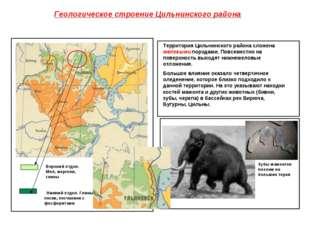Геологическое строение Цильнинского района Верхний отдел. Мел, мергели, глины