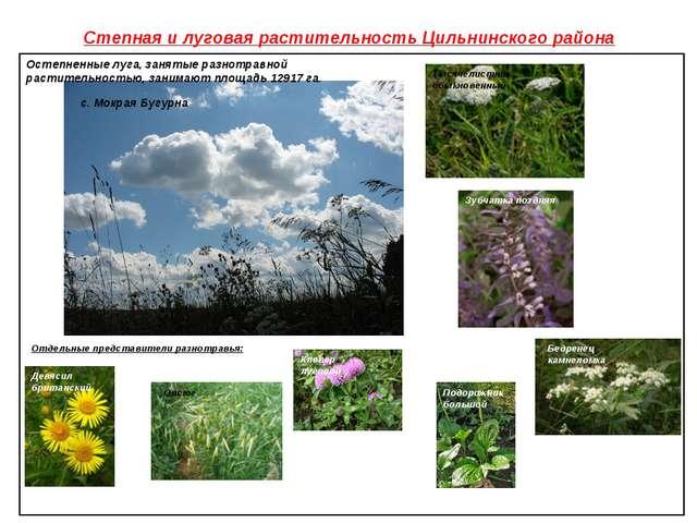 Степная и луговая растительность Цильнинского района Клевер луговой Овсюг Зуб...