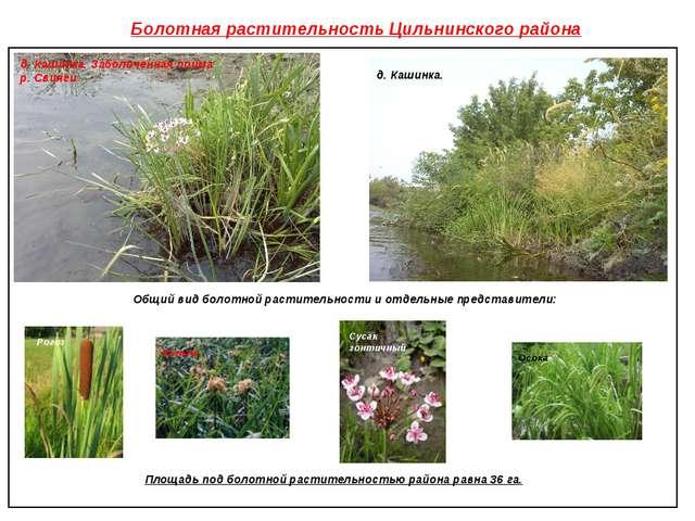 Болотная растительность Цильнинского района д. Кашинка. Заболоченная пойма р....