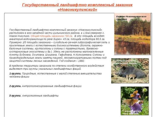 Государственный ландшафтно-комплексный заказник «Новоникулинский» Болото Ново...