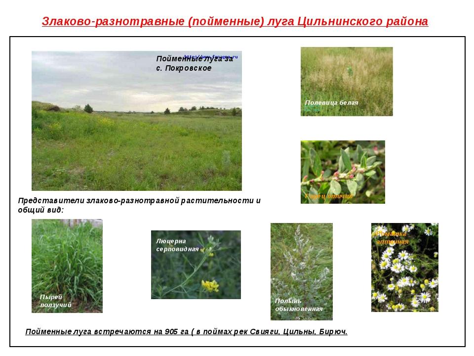 Злаково-разнотравные (пойменные) луга Цильнинского района Пойменные луга за с...