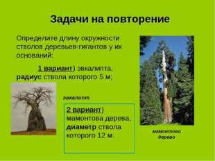 Задачи на повторение Определите длину окружности стволов деревьев-гигантов у