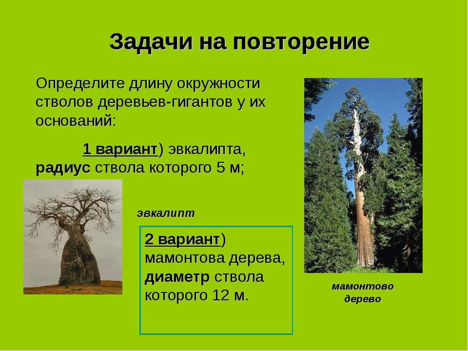 Задачи на повторение Определите длину окружности стволов деревьев-гигантов у...