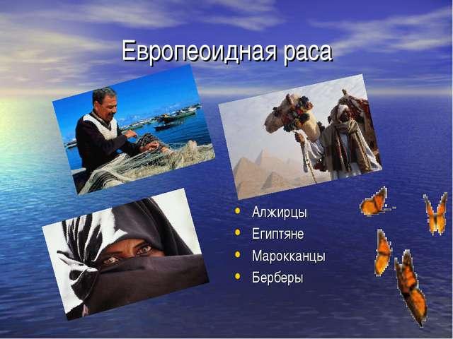 Европеоидная раса Алжирцы Египтяне Марокканцы Берберы