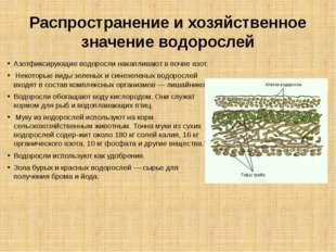 Распространение и хозяйственное значение водорослей Азотфиксирующие водоросли