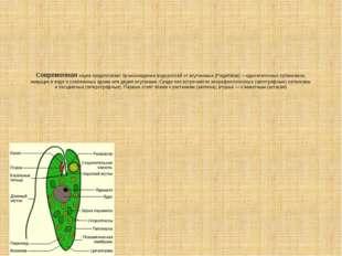 Современная наука предполагает происхождение водорослей от жгутиковых (Flagel