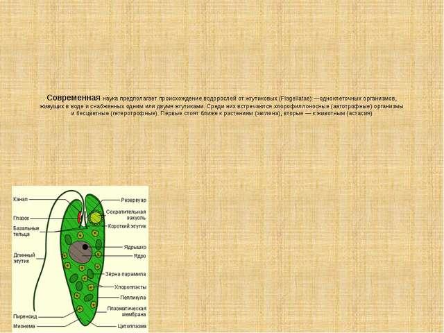 Современная наука предполагает происхождение водорослей от жгутиковых (Flagel...