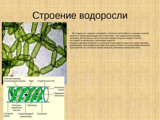 Строение водоросли  Все водоросли содержат хлорофилл и питаются автотрофно,...