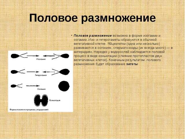 Половое размножение Половое размножение возможно в форме изогамии и оогамии....