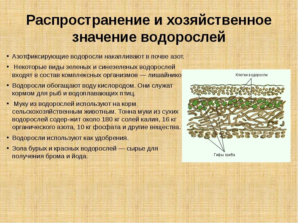 Распространение и хозяйственное значение водорослей Азотфиксирующие водоросли...